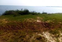 20 acres of land for sale on Mbeya Island at 20m per acre