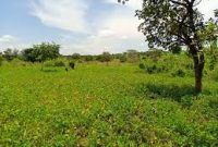 80 square miles for sale in Palabek Lamwo district at 1.8m per acre
