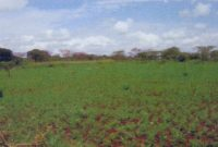 14.15 acres of land for sale in Masindi 36m