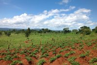 Plots for sale on Entebbbe Road